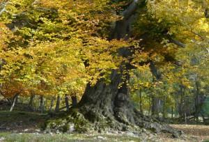 natursymphonie - Mensch und Natur-Bedeutung des Waldes